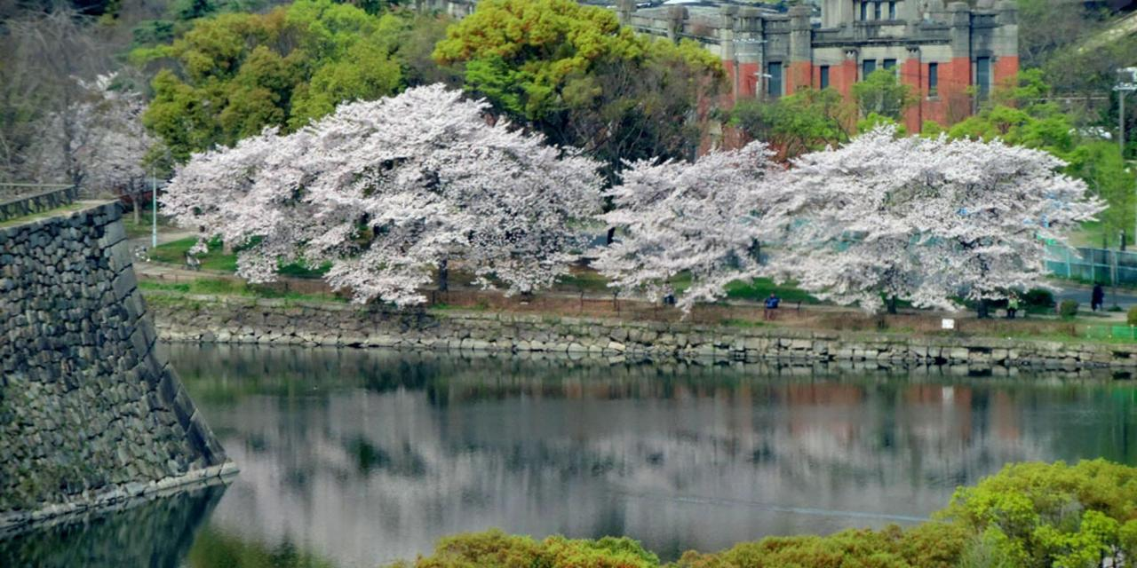 Spring_View (9).jpg