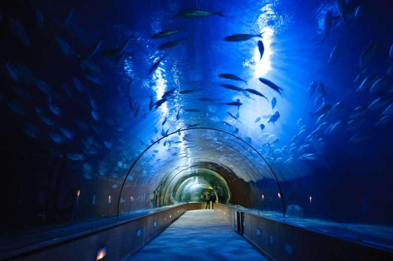 Tunel Oceanografic.jpg