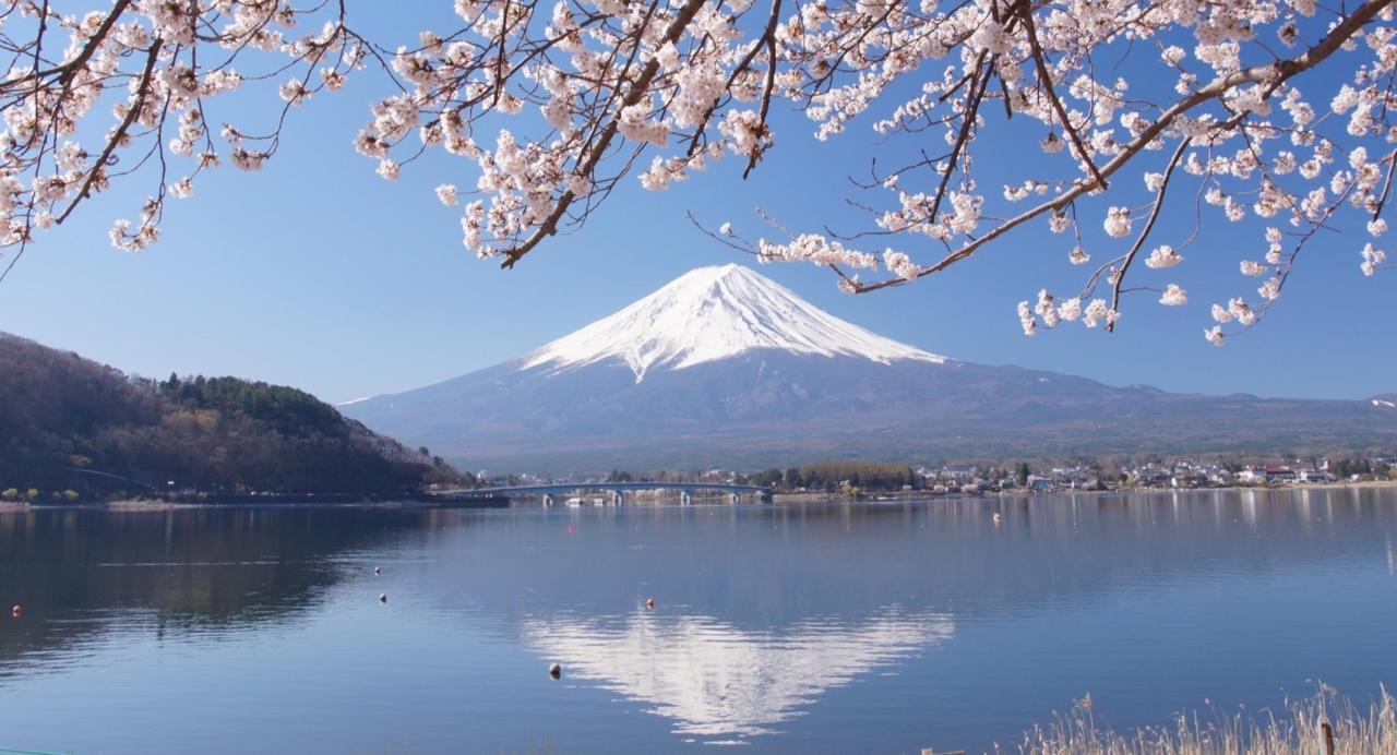 逆さ富士と桜