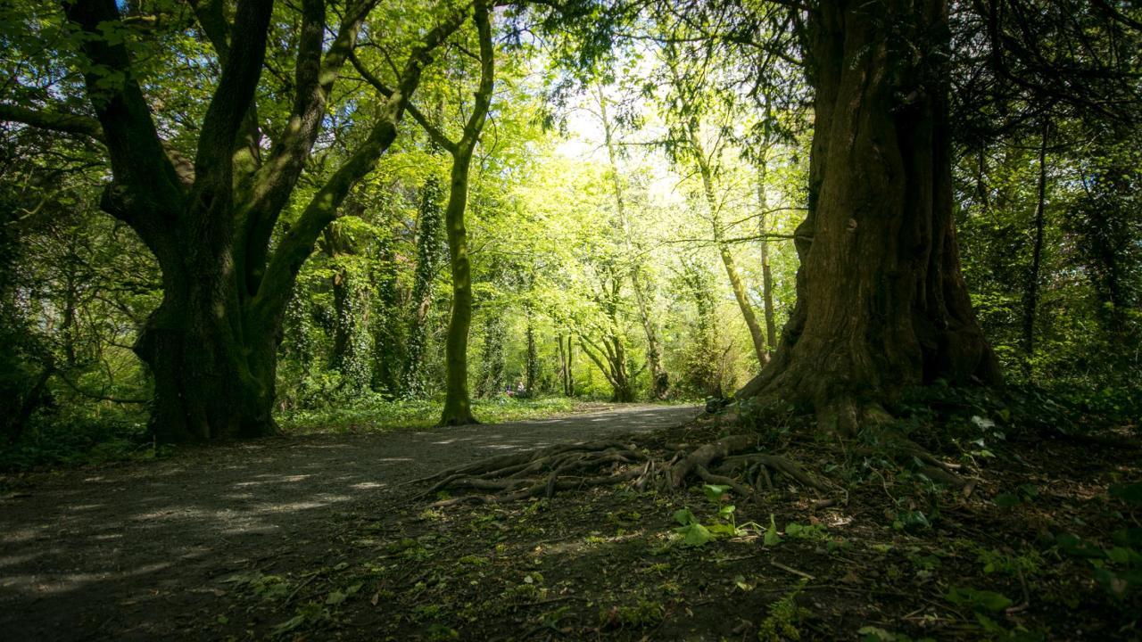 Castle Park Kilkenny
