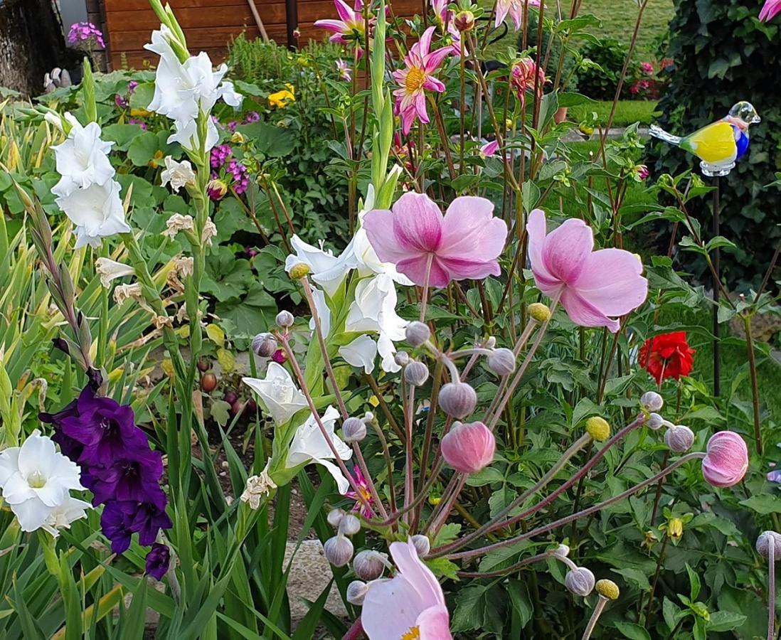 Blumen aus NL1.jpg