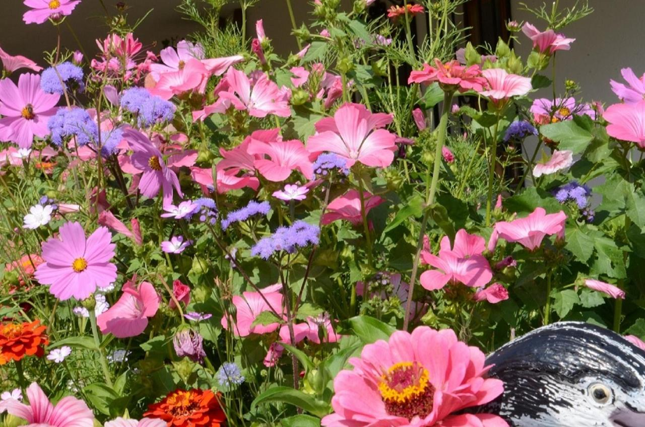 AAA-Gabi's flowergarden 5.JPG
