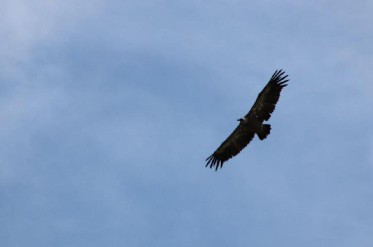 vautour juillet 19.jpg