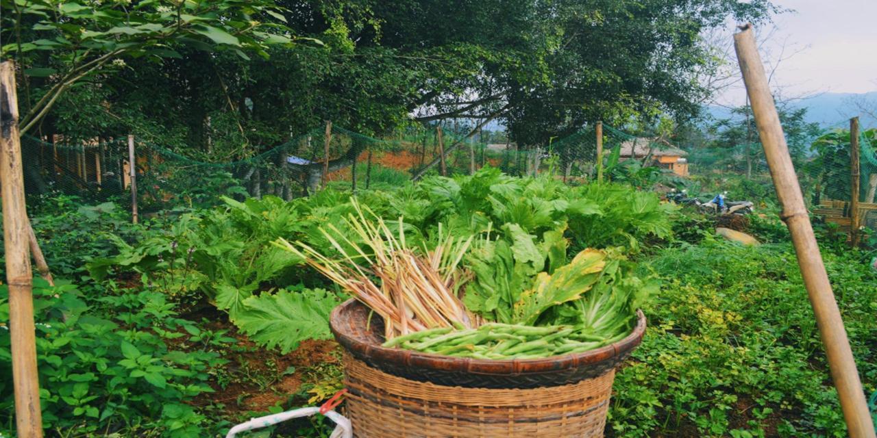 organic farm.jpg